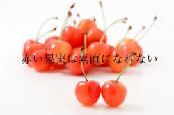 赤い果実は素直になれない〜侯爵令嬢の不本意な結婚〜