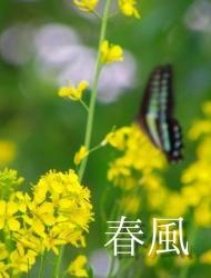春風 ~四季の想い・第二幕~