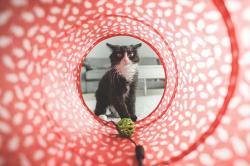 猫に生まれて愛でられたいっ!~エリート宮廷魔術師は猫獣人メイドを溺愛する~